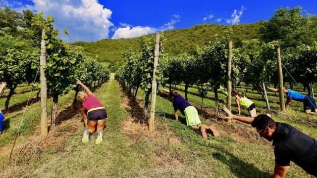 al-rocol_ginnastica-fra-nelle-vigne-2