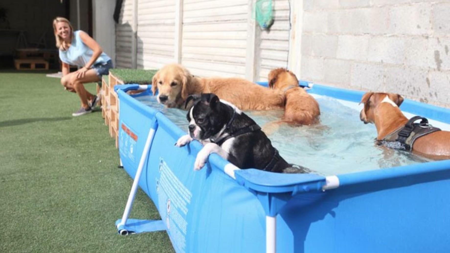 che vita da cani parco piscina e nutrizionista per la On piscina x cani milano