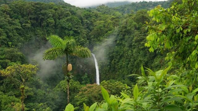 foresta-amazzonica-calipso-peru
