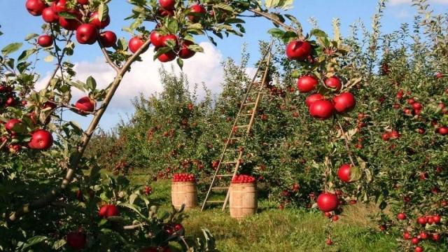 frutta-in-campo