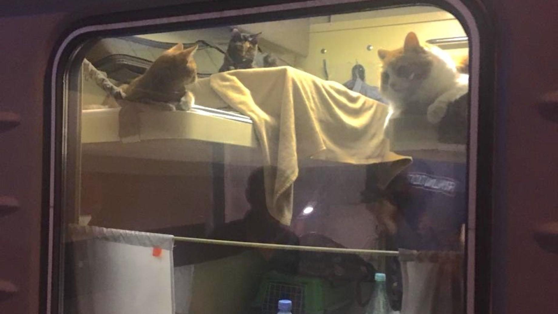 gatti-in-treno