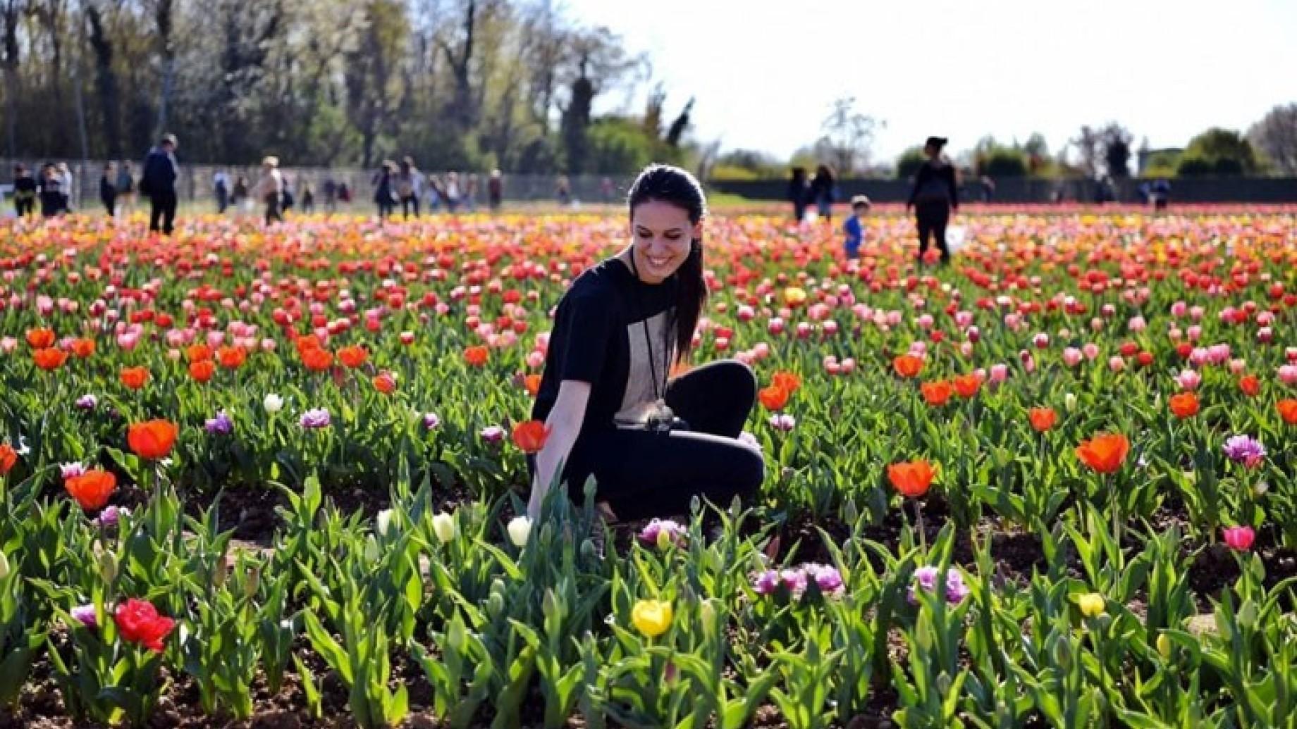 tulipani campo